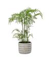 Groene Phlebodium/varen kunstplant 65 cm in grijze pot